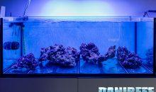 Come funziona la maturazione in un acquario marino con metodo berlinese