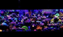 Il meraviglioso acquario di Itsander in un video tutto da vedere