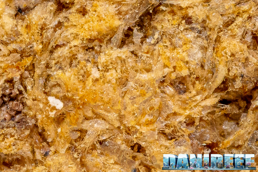 Aquaristica Artemia FD - artemia liofilizzata ideale per tutti i pesci - macro 100%