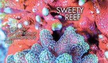 Reef Hobbyist Magazine primo trimestre: sweety reef