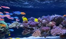 L'incredibile acquario con rocciata sospesa di Wesley (e 10 CoralCare!!!)