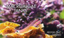 Reef Hobbyist Magazine secondo trimestre –  disponibile e gratis per tutti