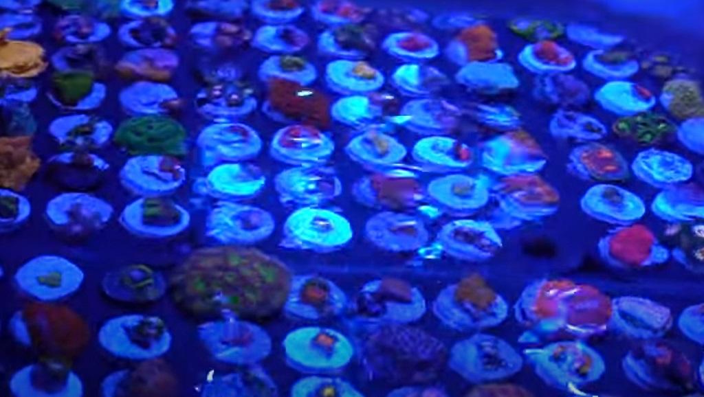 Tullio Dellaquila di ReefBrite ci racconta l'illuminazione in acquario