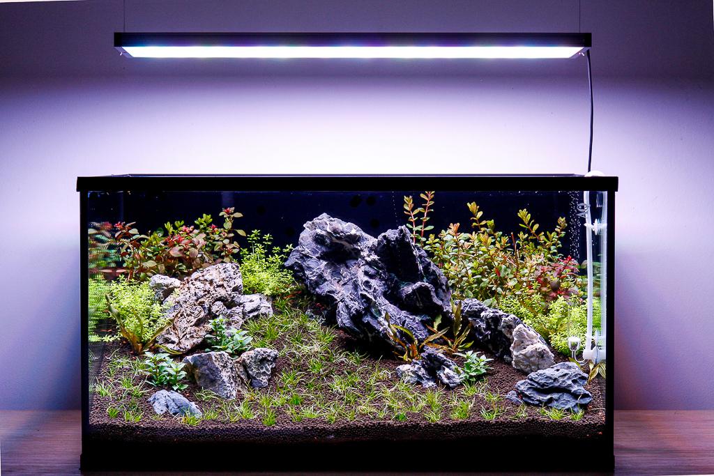 L'acquario ad una settimana dall'avvio