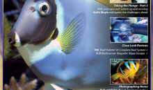 UltraMarine Magazine 88 è dedicato all'Acanthurus leucosternon