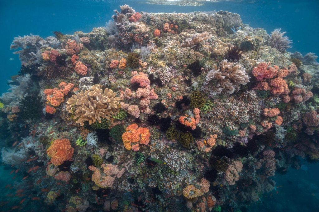 Coralli trovati in una zona dell'oceano con livelli estremamente elevati di anidride carbonica nel Passaggio dell'Isola Verde nelle Filippine. Crediti: Università del Texas ad Austin