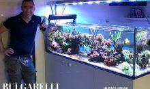 Reef Room Magazine: una nuova rivista gratuita italiana
